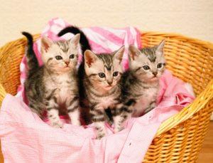 Cuidados de Un Gato