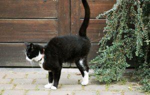 orina de gato