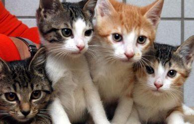 nombre para gatos y gatitos