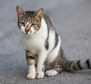 Cuánto Tarda Un Gato en Volver a Casa