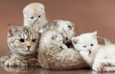 Cuántos Gatos Hay en el Mundo