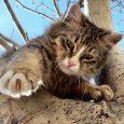 media de vida de un gato